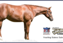 2020 Congress Yearling Preview