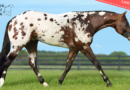 ApHC Stallion Service Auction – Bidding Closes Today!