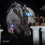 VS GoodRide named NSBA Horse of the Year